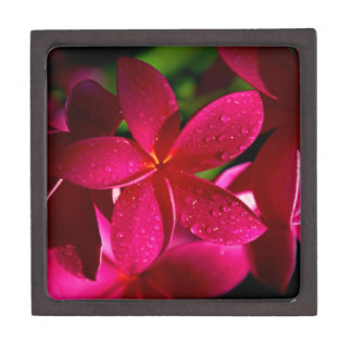 Rosa Plumeria-Blumen Kiste
