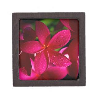 Rosa Plumeria-Blumen Schachtel