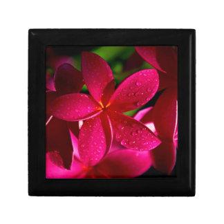 Rosa Plumeria-Blumen Schmuckschachtel