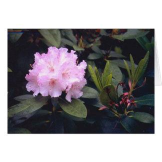 Rosa rhodedendrum karte