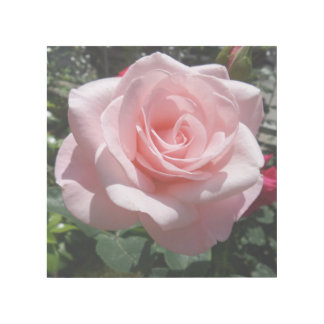 "Rosa Rose 12"""" Verpackung der Galerie-X12 Galerieleinwand"