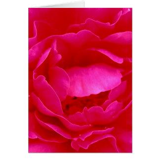 Rosa Rose Grußkarte