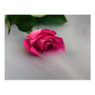 Rosa Rose im Nebel Postkarte