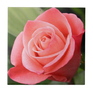 Rosa Rose Keramikfliese