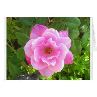 Rosa Rose Notecard Karte