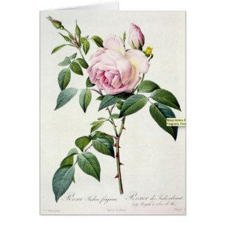Rosa Rose Pierre-Joseph Redoute Gruß-Karte Karte