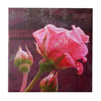 Rosa Rose u. Rosenknospe auf einem Fliese