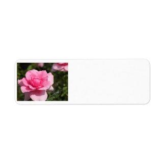 Rosa Rosen-Adressen-Etiketten Kleiner Adressaufkleber