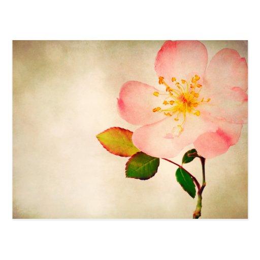 Rosa Rosen-Blumen - Blumen-Rosen auf Watercolor Postkarte