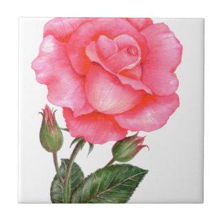 Rosa Rosen-botanische Illustration Fliese