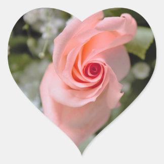 Rosa Rosen-Foto Herz-Aufkleber