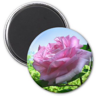 Rosa Rosen-Garten-Blumen-Magnet Runder Magnet 5,7 Cm