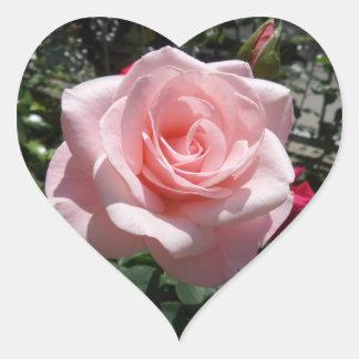 Rosa Rosen-Herz-Aufkleber Herz-Aufkleber
