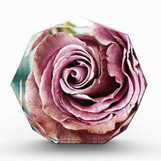 Rosa Rosen-kiesiges Vintages Auszeichnung