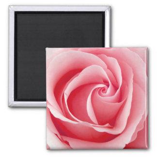 Rosa Rosen-Magnet - Quadrat Quadratischer Magnet
