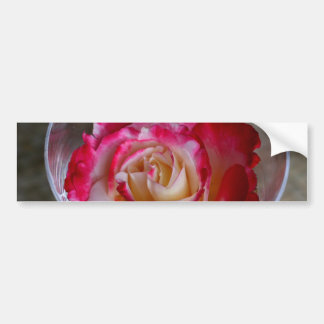 Rosa Rosen-Nahaufnahme im Wein-Glas Autoaufkleber