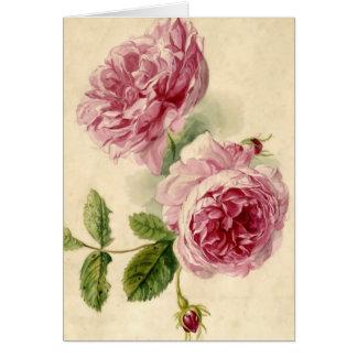 Rosa Rosen-Studie des 18. Jahrhunderts Karte