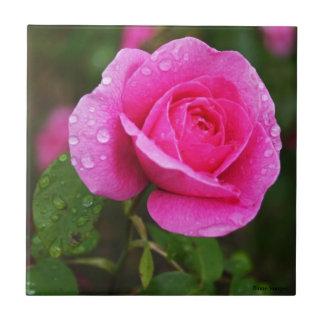 Rosa Rosen-und Tau-Tropfen Keramikfliese