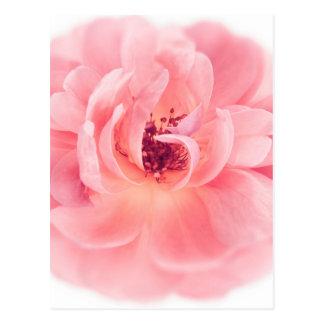 Rosa Rosen-weiße Rosen-Blumen-Blumen mit Blumen Postkarte