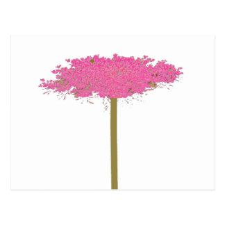 rosa Spitze der Königin Anne Postkarte