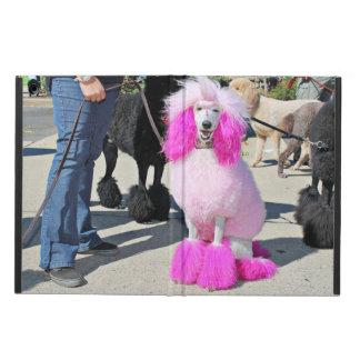 Rosa Standardpudel des Pudel-Tag2016 - Barnes -
