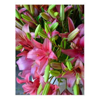 Rosa Stargazerlilien Postkarte