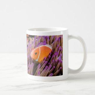 Rosa Stinktier Clownfish und Kaffeetasse
