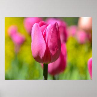 Rosa Tulpe im Garten Poster