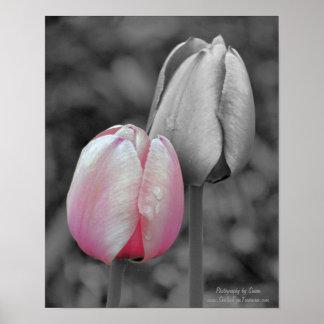Rosa Tulpe-Paare auf Schwarzweiss-Druck Poster