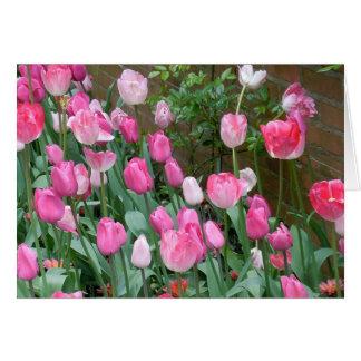Rosa Tulpen Karte