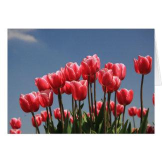 rosa Tulpen und ein blauer Himmel Karte