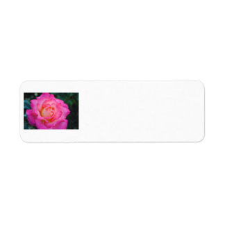 Rosa u. gelbes Rosen-Adressen-Etikett Rücksende Aufkleber