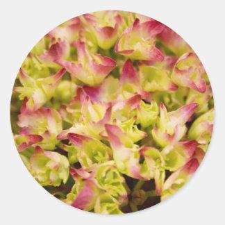 Rosa und Grün Runde Sticker