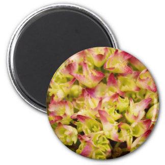 Rosa und Grün Magnets