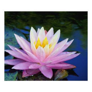 Rosa und Sahnewasser lilly Fotodruck