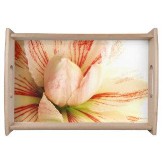 Rosa und weiße Amaryllis-Blume Tablett
