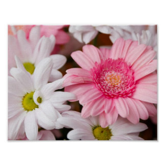 Rosa und weiße Gänseblümchen Poster