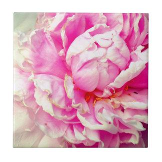 Rosa und weiße Pfingstrosen Fliese