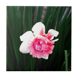 Rosa-und weißedoppelte Narzisse Keramikfliese