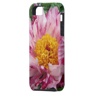 Rosa und weißer Pfingstrose iPhone Kasten iPhone 5 Hülle
