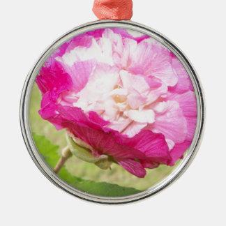 Rosa- und weißeveränderbare Hibiskusblüte Silbernes Ornament