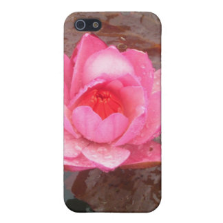 rosa Wasserlilie-Blume iPhone 5 Cover