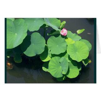 Rosa Wasserlilie Karte