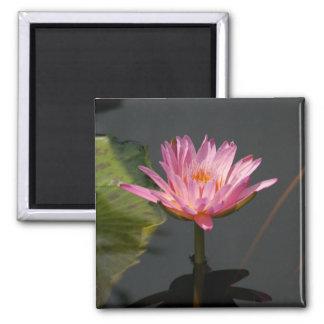 Rosa Wasserlilie-Lotosmagnet Quadratischer Magnet