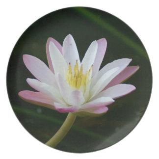 Rosa Wasserlilien-Blume, Foto Melaminteller