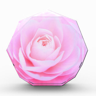 Rosa Weichheit Auszeichnung
