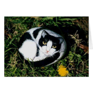 """Rosamindy"" Katzen-Felsenkarte Karte"