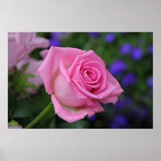 rosaRose Poster