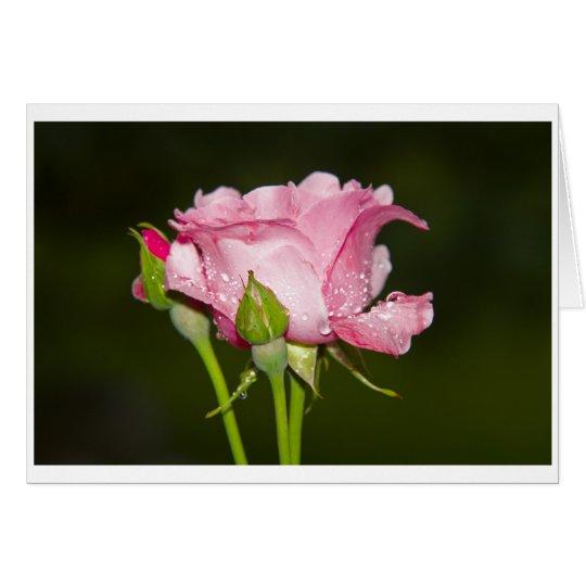 rosarote Rose Grusskarte Karte