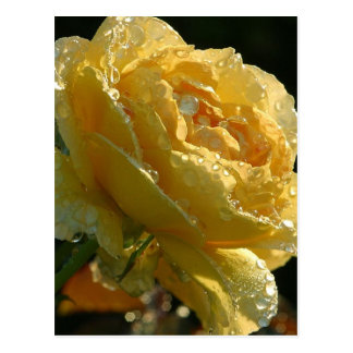 Rose am Balboa-Park Postkarte